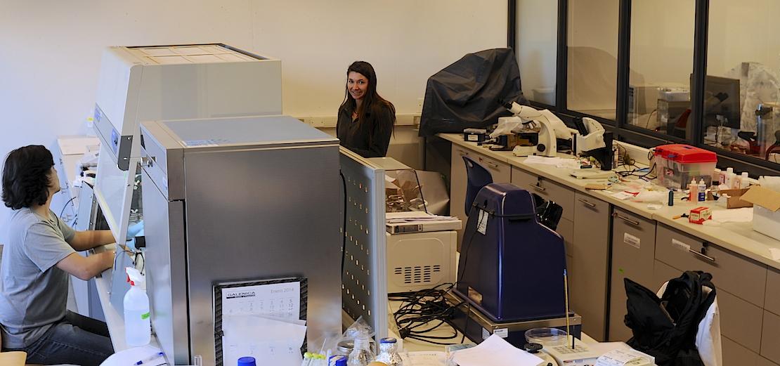 Futuros Ingenieros realizan prácticas de verano en el CINB del Campus Viña